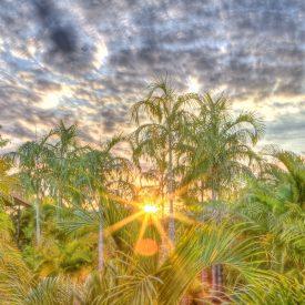 Palm Garden at Sunset