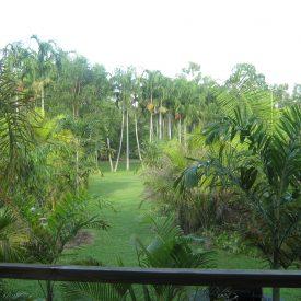 tropical surrounds